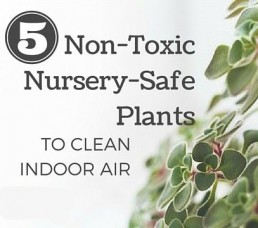 5 non toxic nursery plants